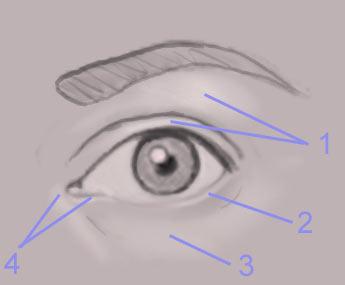 Урок Photoshop рисуем глаз